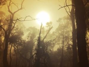 image fog 3