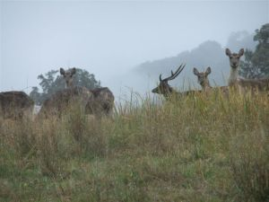 These Rusa deer were photographed on a trip in NSW. We were just shooting with cameras.