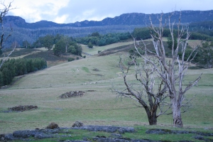 Springfield deer farm. Central Tassie