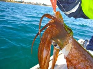 Squid head profile